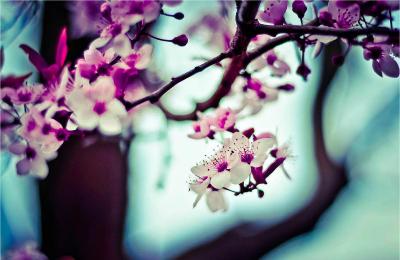 CherryBlossomRighsize